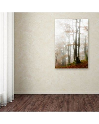 """Winston Porter 'Magic Hour in the Forest' Photographic Print on Wrapped Canvas WNPR6384 Size: 47"""" H x 30"""" W"""