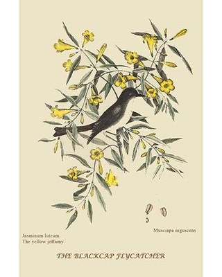 """Buyenlarge 'Blackcap Flycatcher' by Catesby Catesby Painting Print 0-587-30344-1 Size: 36"""" H x 24"""" W x 1.5"""" D"""