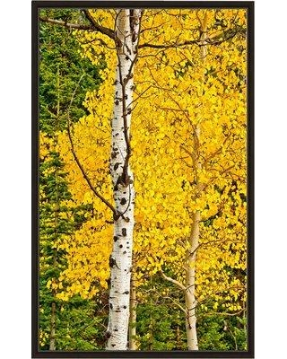 """Winston Porter 'Sunny Blooms' Photographic Print BF163771 Size: 63.5"""" H x 39.5"""" W x 2"""" D Format: Floater Frame"""