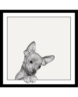 Deals On Latitude Run Sweet Chihuahua Dog Cute Puppy Looking At You Framed Graphic Art On Canvas Print On Canvas Poster Paper In Brown Gray White Wayfair