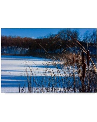 """Millwood Pines Cattails in Snow Along Pond' Photographic Print on Wrapped Canvas MLWP4737 Size: 16"""" H x 24"""" W x 2"""" D"""