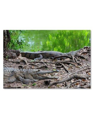 """Trademark Fine Art 'Alligators' Photographic Print on Wrapped Canvas, Canvas & Fabric in Brown, Size 12"""" H x 19"""" W 