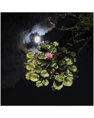 "Trademark Art ''Pink Lotus in the Sky' Photographic Print on Wrapped Canvas KS01400-C Size: 14"" H x 14"" W x 2"" D"