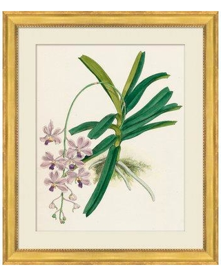 Gracie Oaks 'Orchids' Framed Graphic Art Print GAOK9994