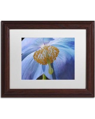 """Ebern Designs 'Blue Poppy' Framed Photographic Print on Canvas ENDE1355 Size: 16"""" H x 20"""" W x 0.5"""" D Frame Color: Brown"""