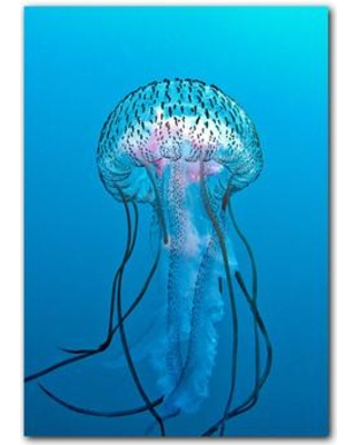 East Urban Home 'Jelly Fish' Photographic Print on Canvas ERNI6926