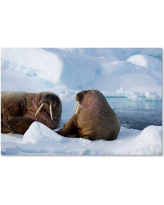 "Trademark Fine Art 'Walruses' Photographic Print on Wrapped Canvas, Canvas & Fabric in Brown, Size 12"" H x 19"" W 