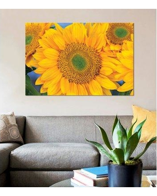 """East Urban Home 'Sunflower Symmetrical Seed Heads North America III' Graphic Art Print on Canvas FTCI9152 Size: 12"""" H x 18"""" W x 0.75"""" D"""