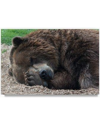 "Trademark Fine Art 'Sleeping Bear' Photographic Print on Wrapped Canvas ALI23398-C Size: 12"" H x 19"" W x 2"" D"