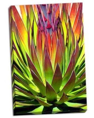 Ebern Designs 'Colorful Agave II' Photographic Print on Wrapped Canvas CJ161941