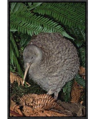 """East Urban Home 'Great Spotted Kiwi Male in Rainforest Habitat New Zealand' Photographic Print EAUB4991 Size: 30"""" H x 20"""" W Format: Wrapped Canvas"""