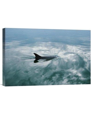 "East Urban Home 'Bottlenose Dolphin Surfacing Shark Bay Australia' Photographic Print EAAC8782 Size: 12"" H x 18"" W Format: Wrapped Canvas"