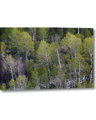"""Millwood Pines 'CA Sierra Nevada Range Aspens in Early Spring' Photographic Print on Wrapped Canvas BF155369 Size: 11"""" H x 16"""" W x 1.5"""" D"""