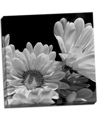 Ebern Designs 'Daisy Dazzle BW I' Photographic Print on Wrapped Canvas BI046379