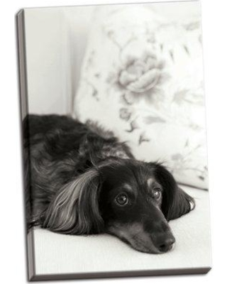Winston Porter 'Dachshund' Photographic Print on Wrapped Canvas BF050292
