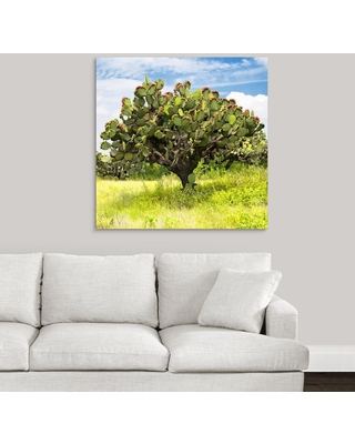 "GreatBigCanvas ""Prickly Pear Cactus I""by Philippe Hugonnard Canvas Wall Art, Multi-Color"