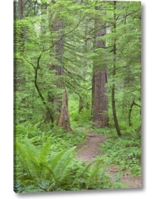 """Millwood Pines 'Washington Olympic Nf Trail Through the Forest' Photographic Print on Wrapped Canvas BF153905 Size: 16"""" H x 10"""" W x 1.5"""" D"""
