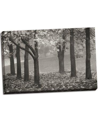 Winston Porter 'Colors in the Mist VII' Photographic Print on Wrapped Canvas BI050705