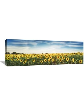Global Gallery 'Sunflower Field Plateau Valensole Provence France' by Frank Krahmer Photographic Print on Wrapped Canvas GCS-463681-1236-142