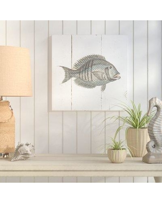 """Breakwater Bay 'Fish Sketches I Shiplap' Drawing Print BKWT4404 Size: 36"""" H x 36"""" W x 1.5"""" D Format: Wrapped Canvas"""