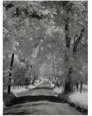 """Trademark Art 'Sparks Ln Ir' Photographic Print on Wrapped Canvas ALI37239-CGG Size: 24"""" H x 18"""" W x 2"""" D"""