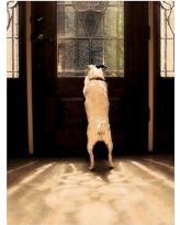 'Anticipation' by Gifty Idea Greeting Cards and Such! Ready to Hang Canvas Wall Art, Multi-Colored