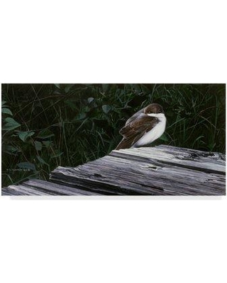 """Trademark Art 'Tree Swallow' Graphic Art Print on Wrapped Canvas ALI32308-CGG Size: 16"""" H x 32"""" W x 2"""" D"""