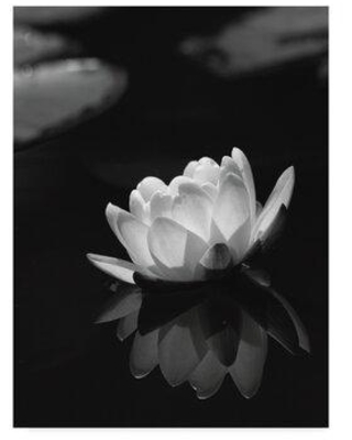 """Trademark Fine Art 'Water Lily' Photographic Print on Wrapped Canvas ALI36249-CGG Size: 19"""" H x 14"""" W x 2"""" D"""