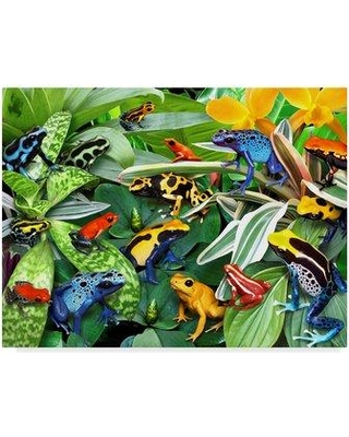 "Trademark Art 'Dart Frogs' Acrylic Painting Print on Wrapped Canvas ALI23929-C Size: 18"" H x 24"" W x 2"" D"