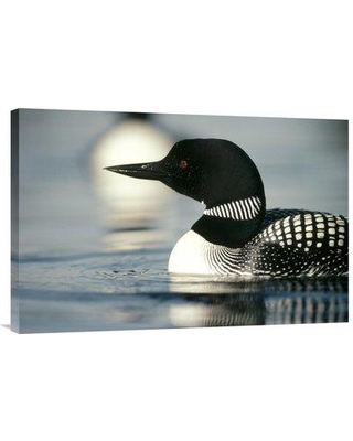 """East Urban Home 'Common Loon Adult on Lake in the Summer Wyoming' Photographic Print EAUB4777 Size: 20"""" H x 30"""" W Format: Wrapped Canvas"""
