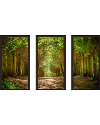 "PicturePerfectInternational ""Walkway Lane Path"" 3 Piece Framed Photographic Print Set 704-2610-1224 / 704-2610-1632 Size: 33.5"" H x 52.5"" W x 1"" D"