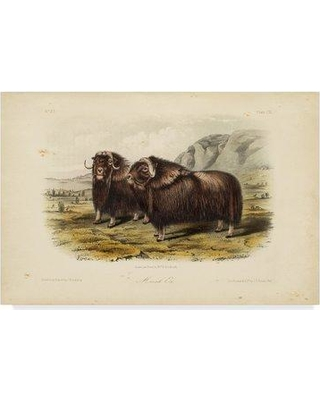 """East Urban Home 'Musk Ox' Oil Painting Print on Wrapped Canvas W000198651 Size: 16"""" H x 24"""" W x 2"""" D"""