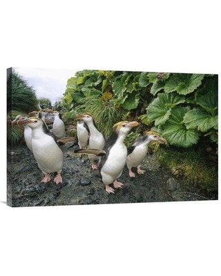 "East Urban Home 'Royal Penguin Group Walking to Colony Macquarie Island' Photographic Print EAAC8792 Size: 20"" H x 30"" W Format: Wrapped Canvas"