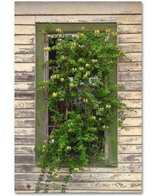 """Trademark Art 'Window Flowers' Photographic Print on Wrapped Canvas ALI16268-C Size: 32"""" H x 22"""" W"""