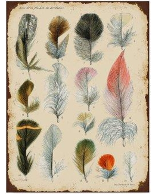 """World Menagerie 'Vintage Feather Study Pink' Graphic Art Print on Wrapped Canvas WRMG5850 Size: 32"""" H x 24"""" W x 2"""" D"""
