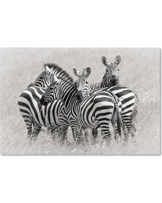 "Trademark Art 'Zebras' Photographic Print on Wrapped Canvas 1X00684-C Size: 16"" H x 24"" W"