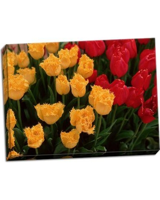 August Grove 'Tulips' Photographic Print on Wrapped Canvas BI053398