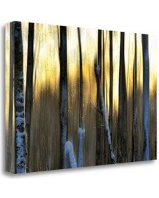 "Tangletown Fine Art 'The Forest at Dawn' Graphic Art Print on Wrapped Canvas CA312758-2416c Size: 26"" H x 39"" W"