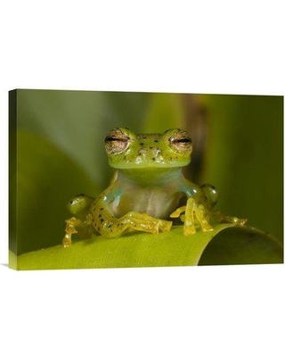 """East Urban Home 'Emerald Glass Frog Northwest Ecuador' Photographic Print EAAC8245 Size: 12"""" H x 18"""" W Format: Wrapped Canvas"""