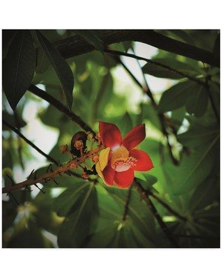 """Bay Isle Home 'Buddha Flower' Photographic Print on Wrapped Canvas BYIL5503 Size: 14"""" H x 14"""" W x 2"""" D"""