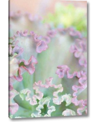 """Winston Porter 'California San Diego Abstract of Succulent' Photographic Print on Wrapped Canvas BI153177 Size: 24"""" H x 16"""" W x 1.5"""" D"""