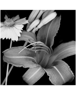 """Trademark Art 'Day Lily and Coreopsis' Graphic Art Print on Wrapped Canvas ALI34316-CGG Size: 35"""" H x 35"""" W x 2"""" D"""
