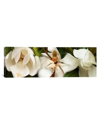 """East Urban Home 'Close-up of Magnolia Flowers' Photographic Print on Canvas EASU1223 Size: 16"""" H x 48"""" W x 0.75"""" D"""