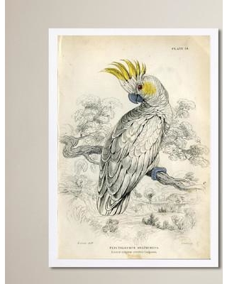 """Bloomsbury Market 'Sulphur Cockatoo' Framed Painting Print BLMT1421 Size: 24"""" H x 16"""" W"""