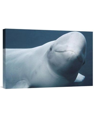 """East Urban Home 'Beluga Vancouver Aquarium Canada' Photographic Print EAAC8184 Size: 16"""" H x 24"""" W Format: Wrapped Canvas"""