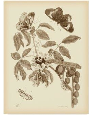 "Charlton Home 'Nature Study in Sepia II' Graphic Art Print on Wrapped Canvas CRLM2798 Size: 19"" H x 14"" W x 2"" D"