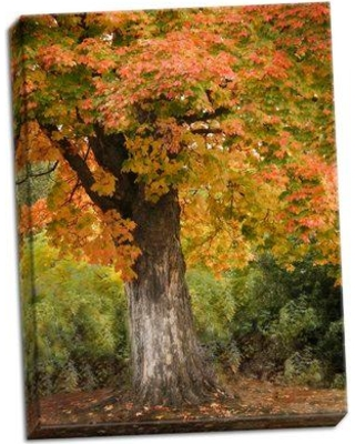 Millwood Pines 'Fall Maple Fever I' Photographic Print on Wrapped Canvas BI051052