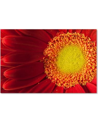 """Trademark Art Nature's Beauty Photographic Print on Wrapped Canvas MFG0035-C Size: 30"""" H x 47"""" W x 2"""" D"""