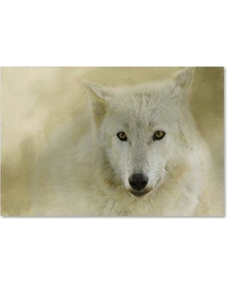 """Trademark Fine Art 'Portrait of a Timber Wolf' Graphic Art Print on Wrapped Canvas ALI14671-C Size: 12"""" H x 19"""" W"""