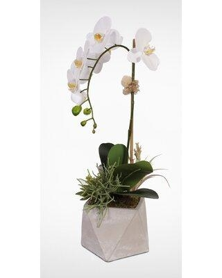 World Menagerie Orchid with Succulents Floral Arrangements and Centerpieces in Pot W001623880